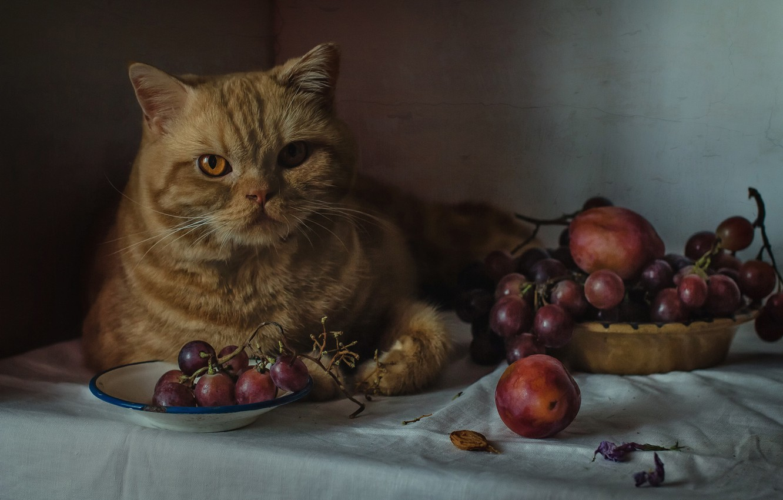 Photo wallpaper look, grapes, red cat, cat