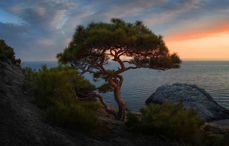 Photo wallpaper sea, the sky, clouds, landscape, branches, stones, tree, rocks, shore, the evening, slope, horizon, needles, …