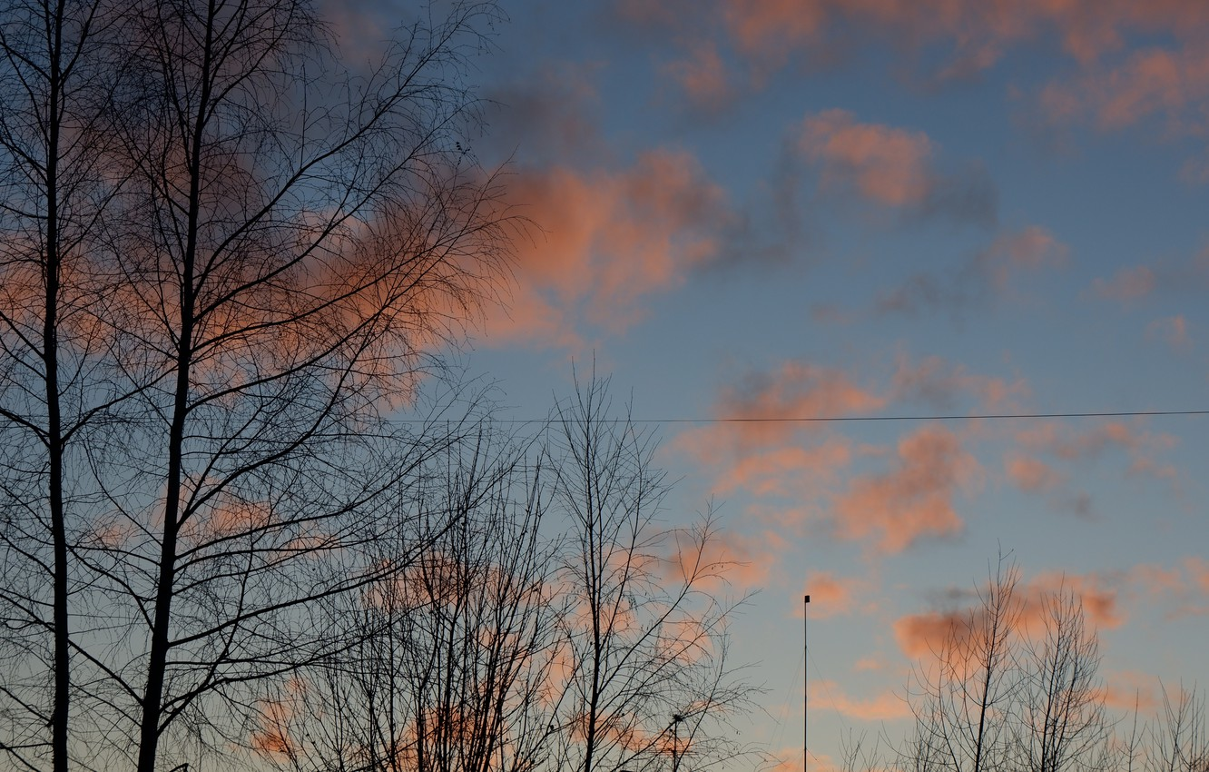 Photo wallpaper the sky, clouds, trees, sunset, orange, blue, wire