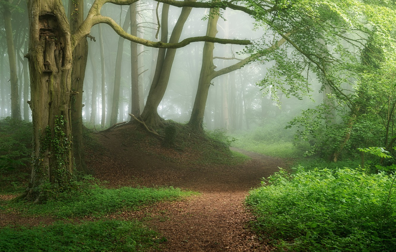 Photo wallpaper forest, fog, photo, path