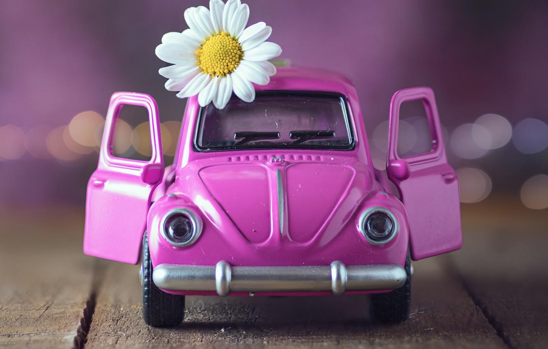 Photo wallpaper flower, toy, Board, Daisy, machine, bokeh