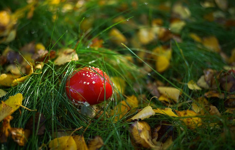 Photo wallpaper forest, grass, mushroom, mushroom