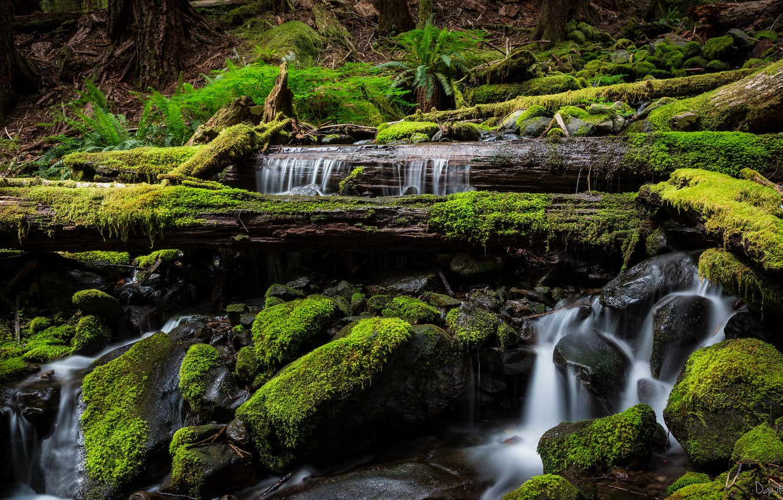 Photo wallpaper water, stones, moss