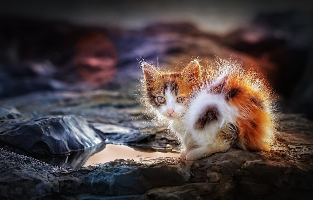 Photo wallpaper look, puddle, baby, kitty, ruffled