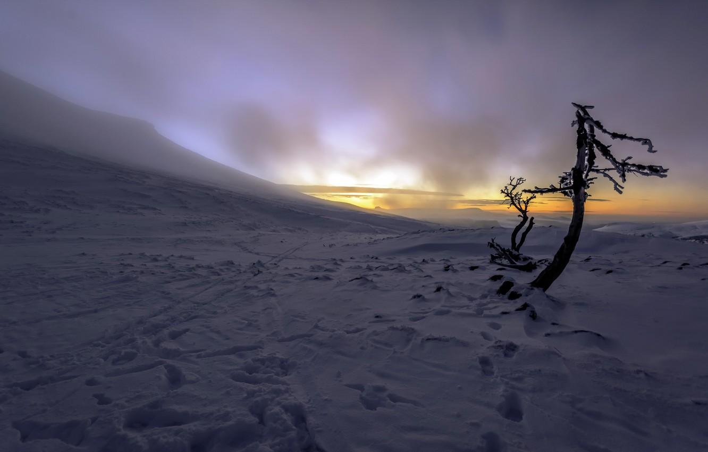 Photo wallpaper winter, fog, morning
