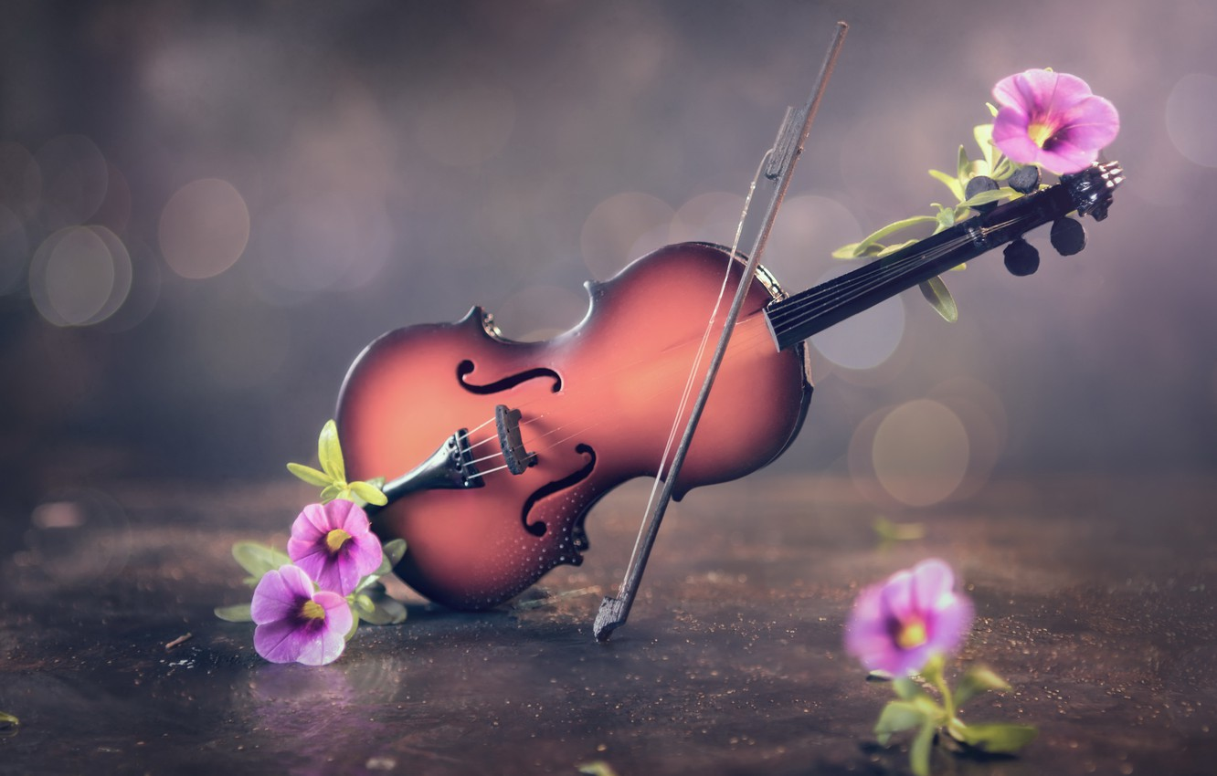 Photo wallpaper flowers, background, violin
