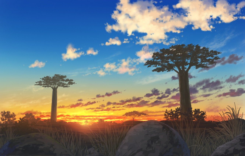 Photo wallpaper landscape, sunset, nature, baobabs