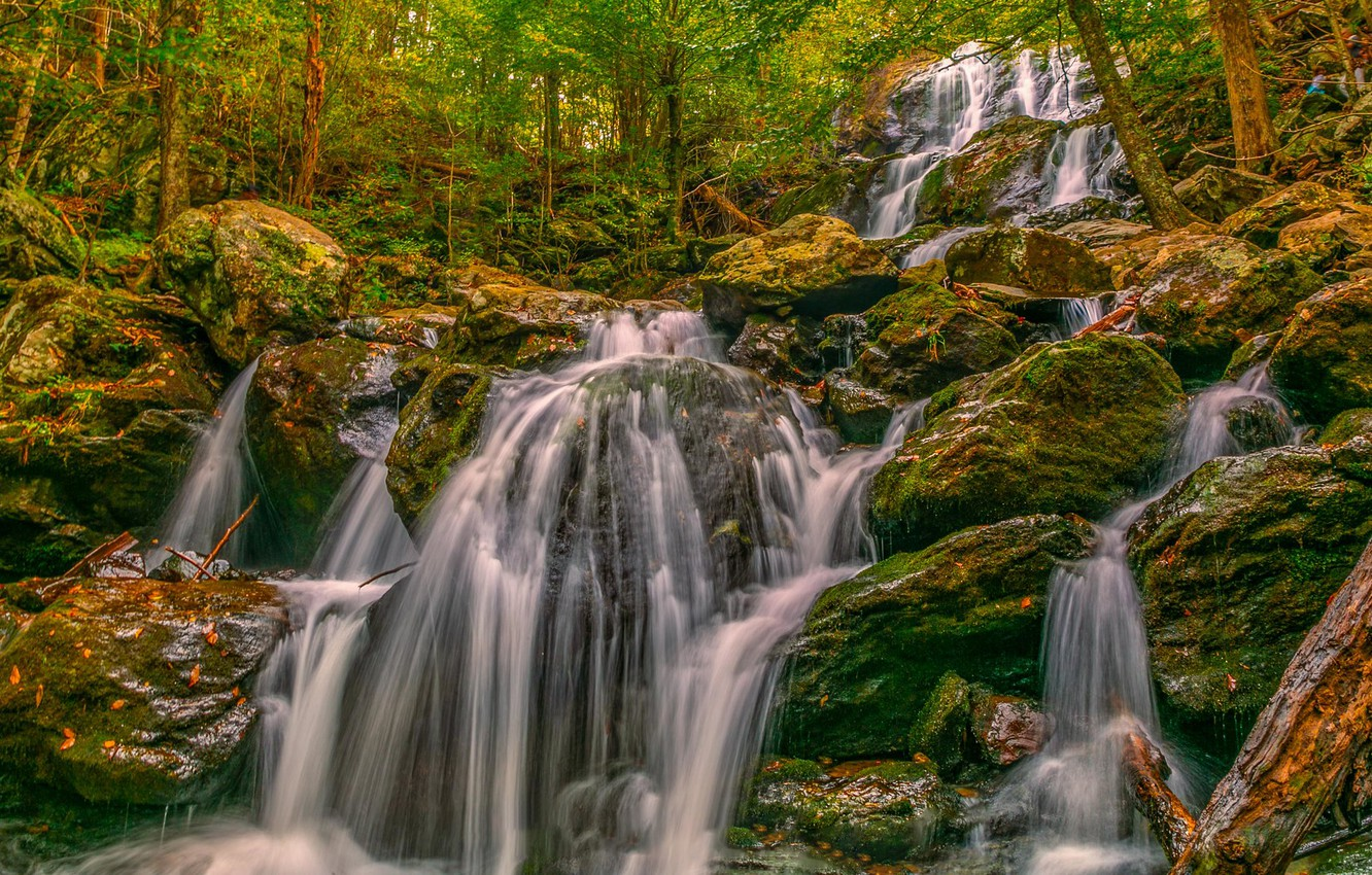 Photo wallpaper forest, trees, stones, waterfall, cascade