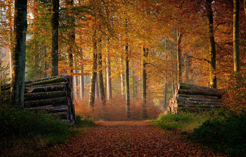 Photo wallpaper autumn, forest, logs