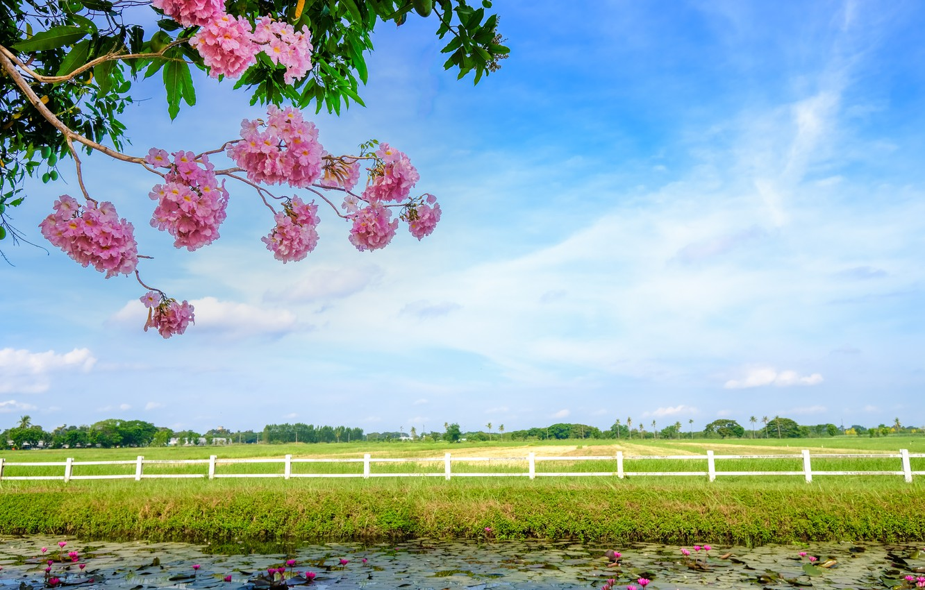 Photo wallpaper field, grass, trees, branches, river, spring, flowering, landscape, pink, blossom, beautiful, tree, spring, bloom