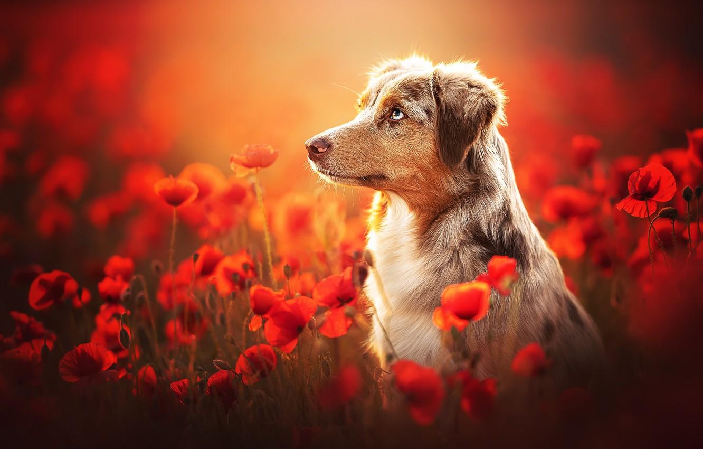 Photo wallpaper summer, Maki, dog