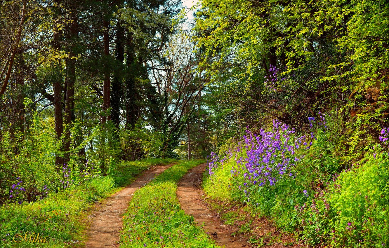 Photo wallpaper Path, Trees, Forest, Forest, Trees, Path
