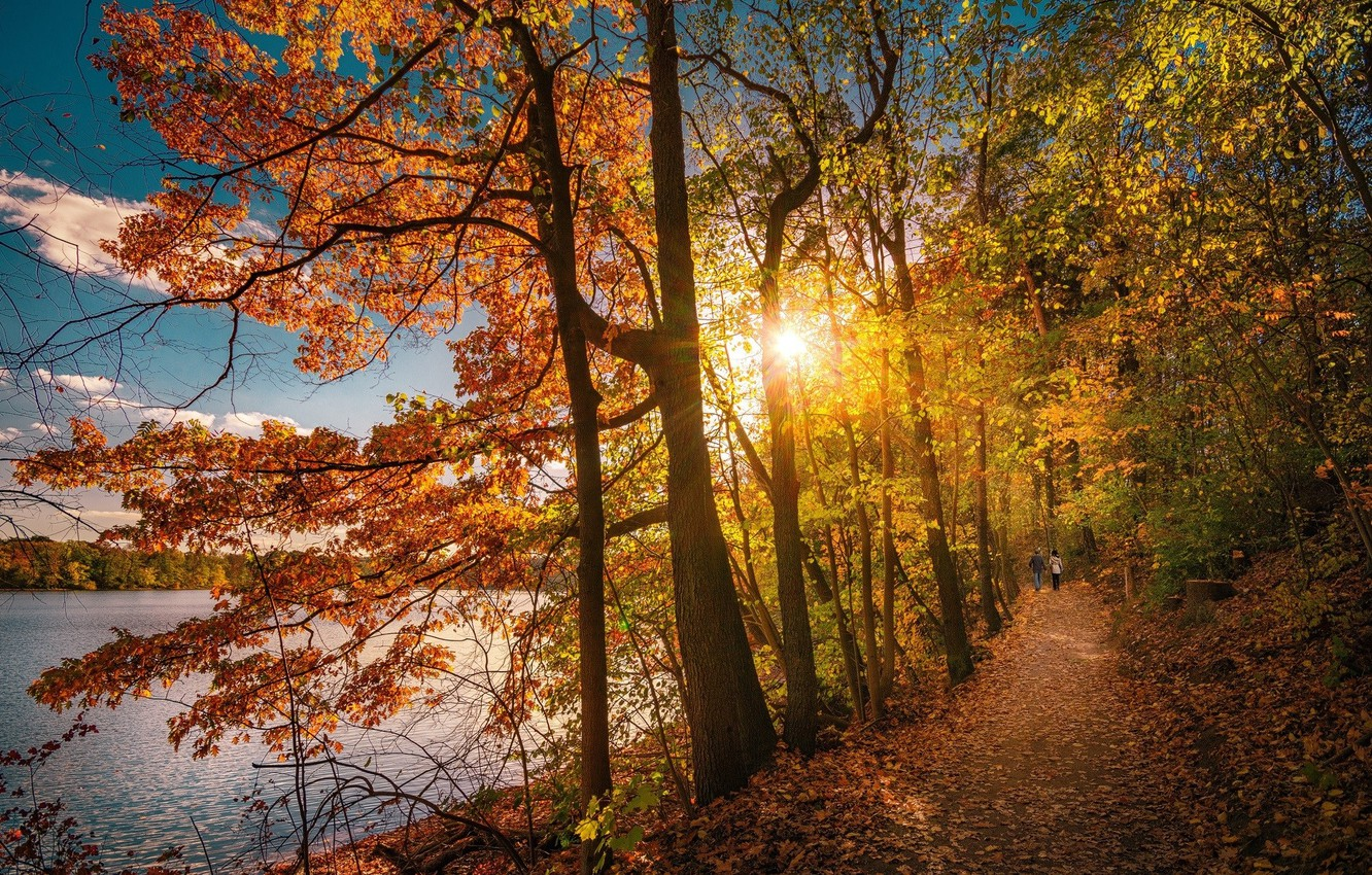 Photo wallpaper road, autumn, forest, people, morning
