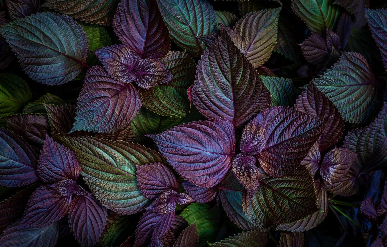 Photo wallpaper leaves, macro, bright