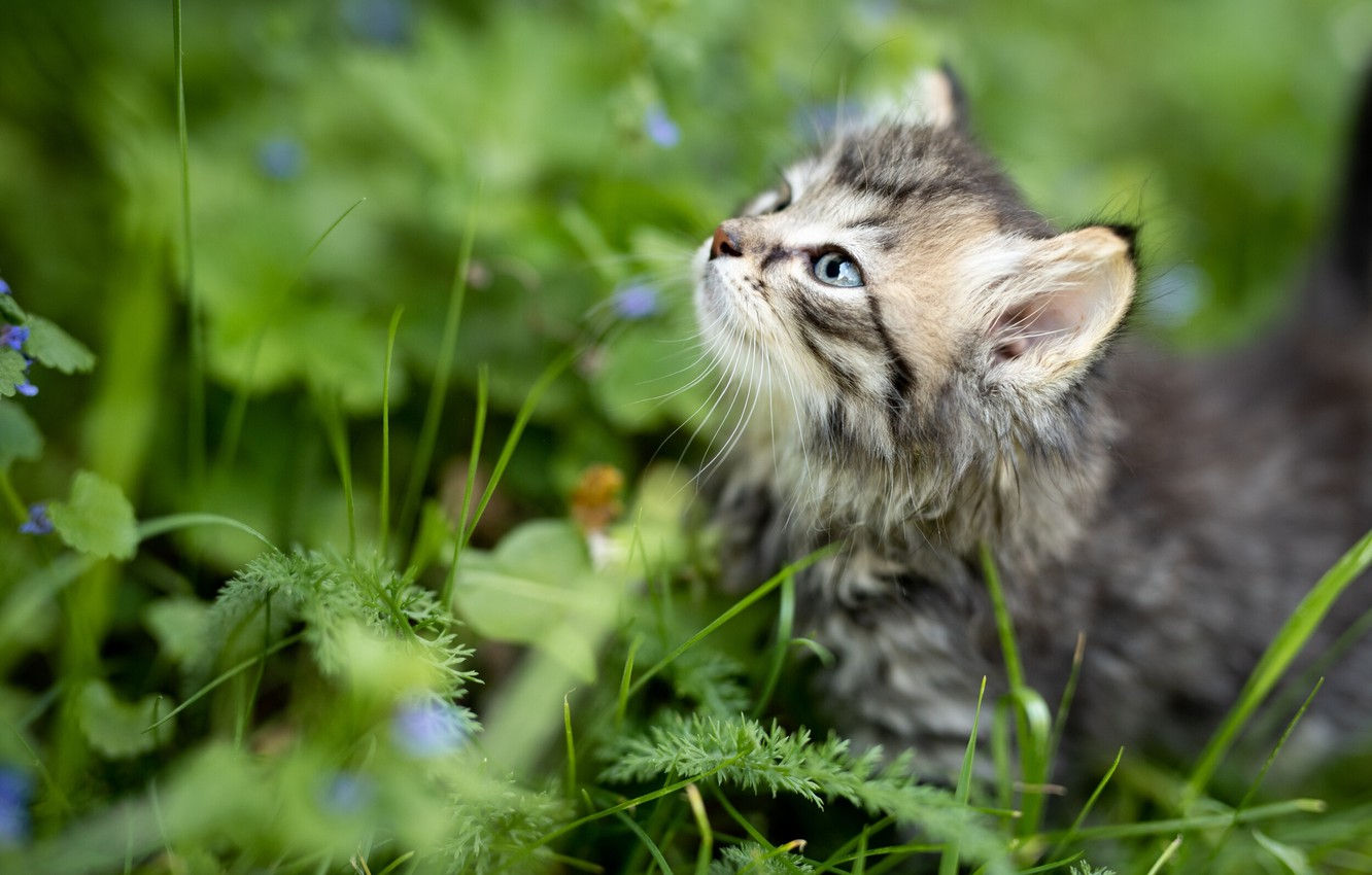 Photo wallpaper summer, grass, nature, animal, profile, cub, kitty