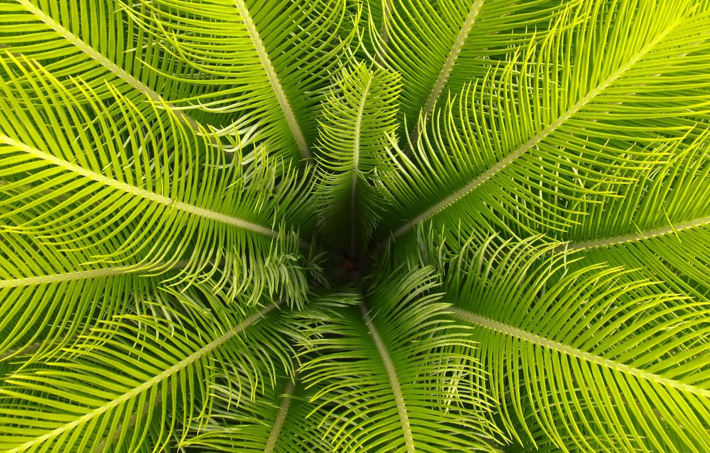 Photo wallpaper leaves, macro, Palma