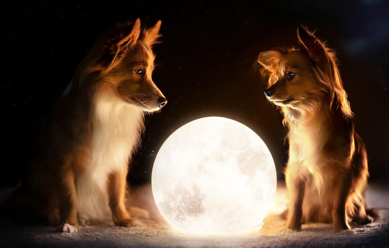 Photo wallpaper dogs, ball, friends