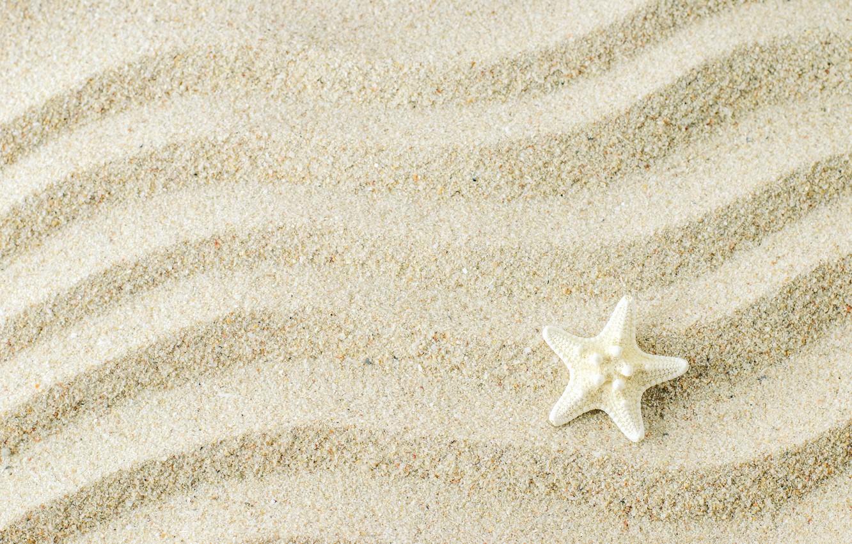 Photo wallpaper sand, background, starfish, beach, texture, background, sand, marine, starfish