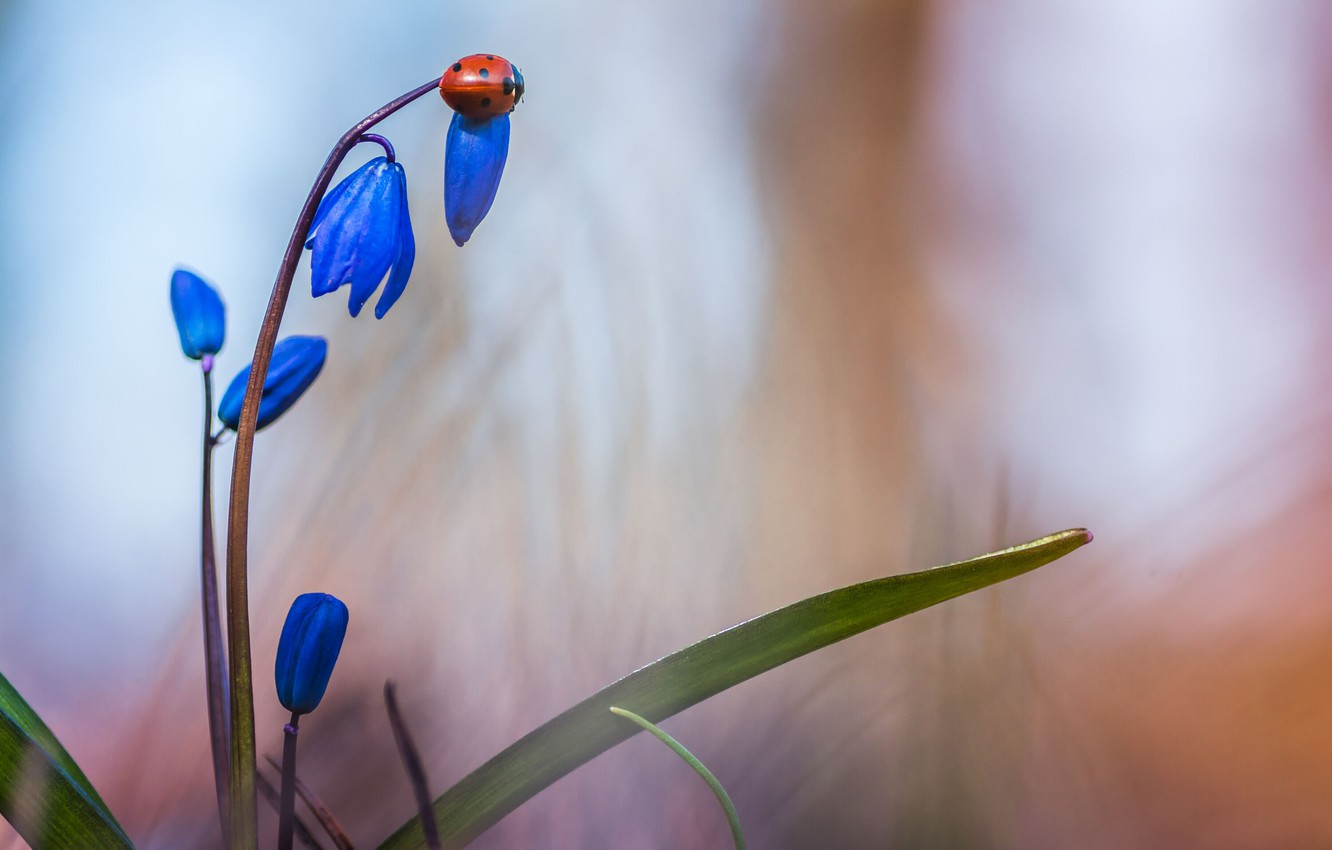 Photo wallpaper flower, leaves, macro, nature, ladybug, beetle