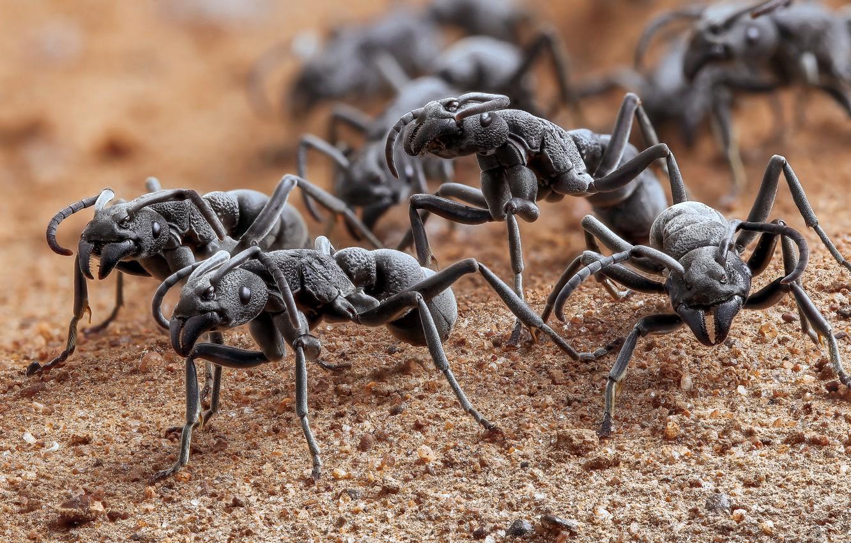 Photo wallpaper macro, ants, bokeh