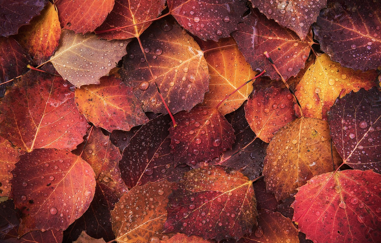 Photo wallpaper autumn, drops, macro, foliage