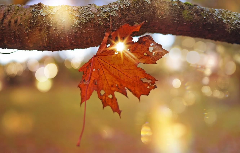 Wallpaper Autumn Rays Light Orange Nature Sheet Glare