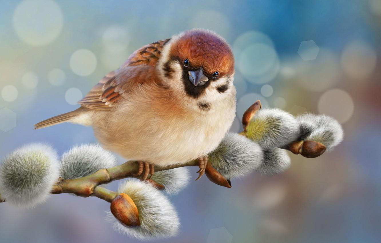 Photo wallpaper glare, background, bird, photoshop, branch, Sparrow, bird, Verba, Sparrow