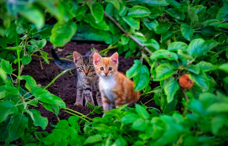 Photo wallpaper leaves, kittens, kids, a couple, two kittens