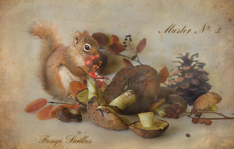 Photo wallpaper berries, mushrooms, protein, still life, bump, Rowan, boletus, Botanical album