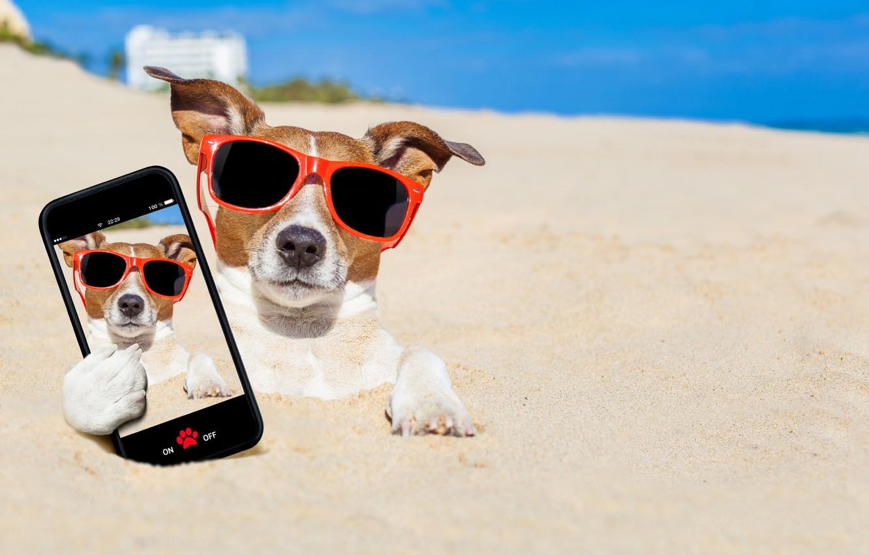Photo wallpaper sand, sea, beach, the sun, photo, photoshop, humor, glasses, bokeh, smartphone, selfie, Jack Russell Terrier