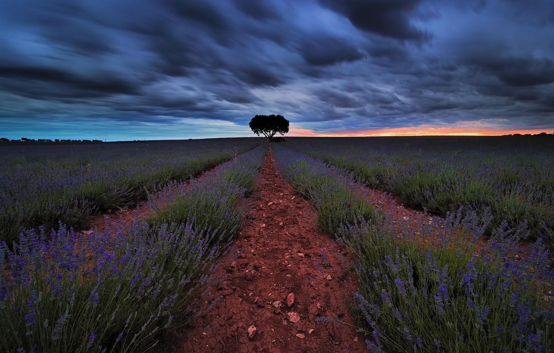 Photo wallpaper field, summer, sunset, lavender