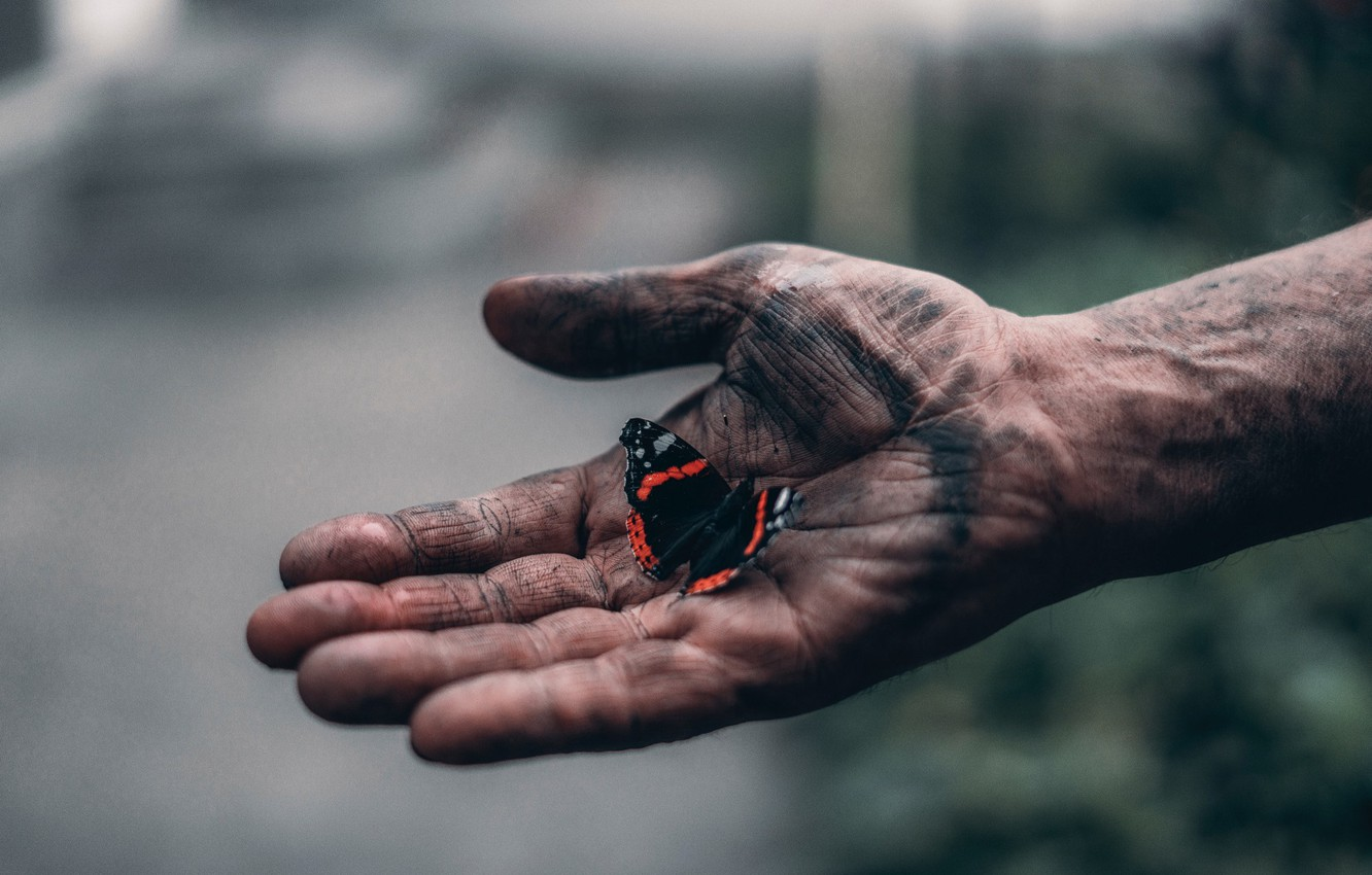 Photo wallpaper butterfly, hand, Elijah O'Donnell