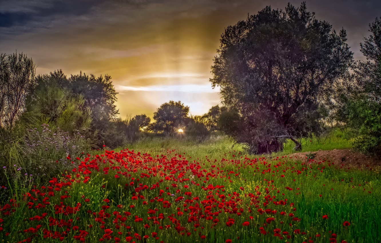 Photo wallpaper flowers, nature, morning