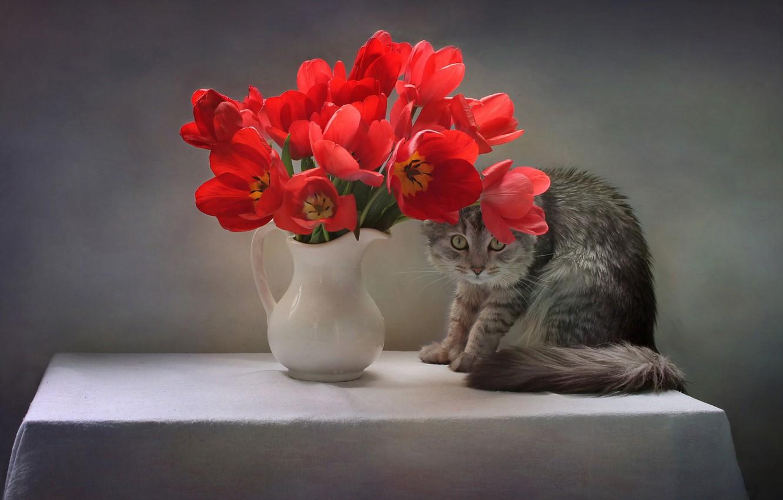 Photo wallpaper cat, cat, flowers, pose, table, animal, tulips, pitcher, tablecloth, Kovaleva Svetlana, Svetlana Kovaleva