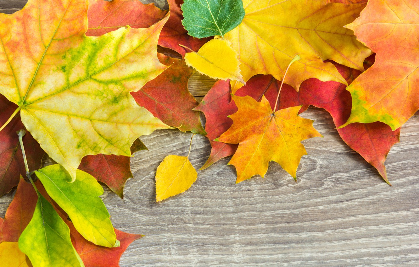 Photo wallpaper autumn, leaves, background, Board, colorful, maple, wood, autumn, leaves, maple