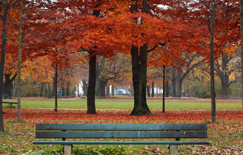 Photo wallpaper autumn, leaves, trees, bench, Park, colorful, nature, park, autumn, leaves, tree, bench