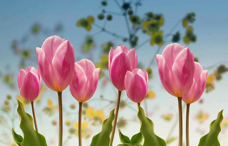 Photo wallpaper spring, Tulips, garden.
