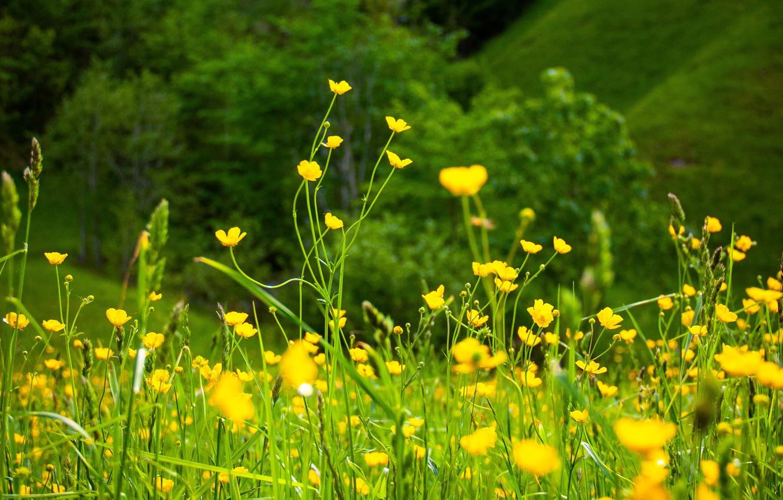 Wallpaper Greens Summer Flowers Nature Summer Nature