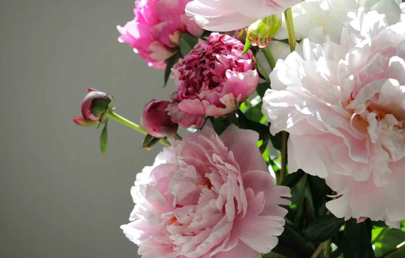 Photo wallpaper flowers, buds, peony, bouquet of peonies