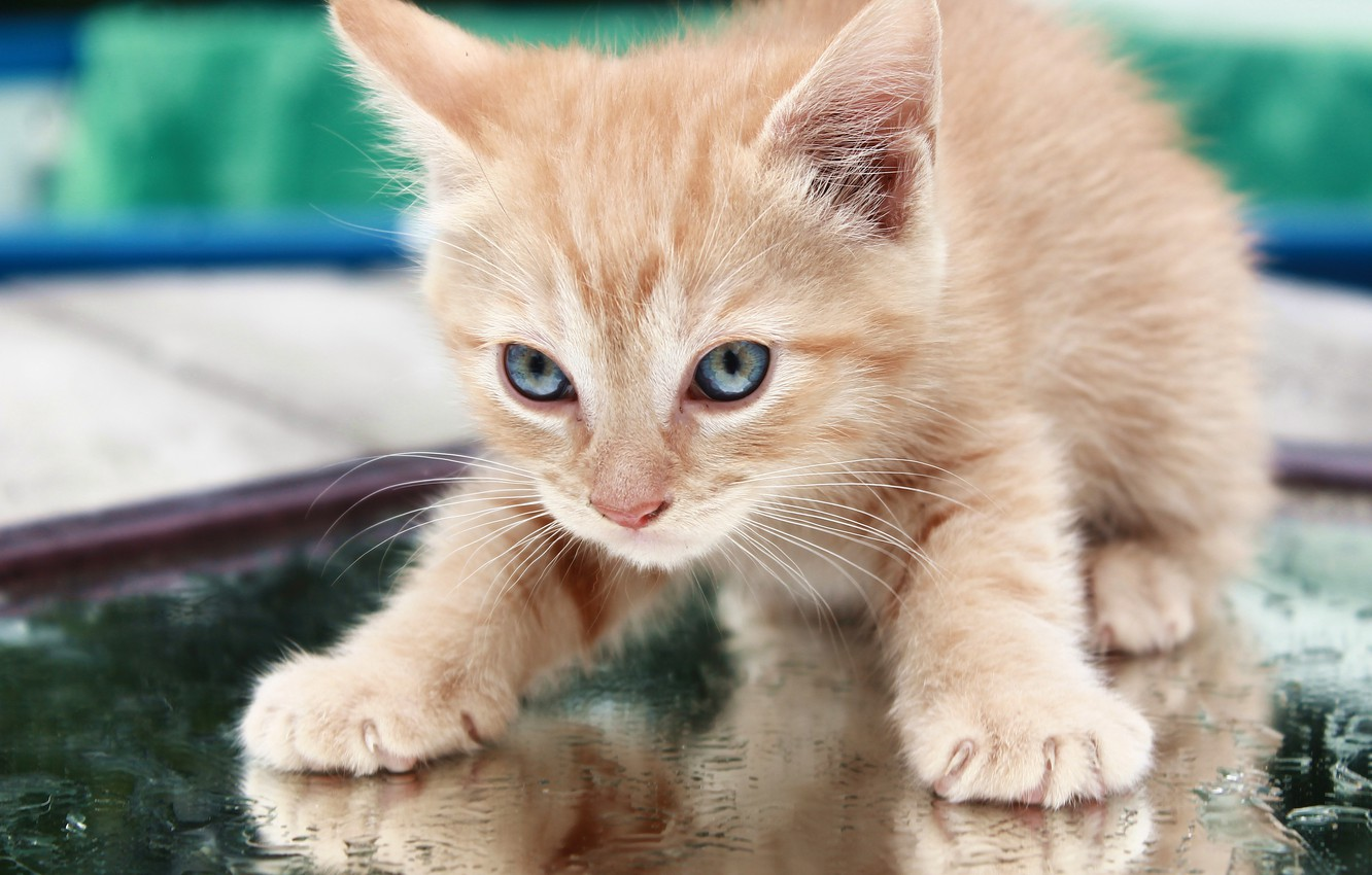 Photo wallpaper baby, red, muzzle, kitty
