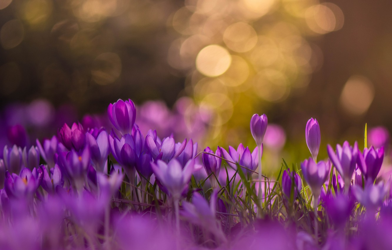 Photo wallpaper flowers, nature, spring