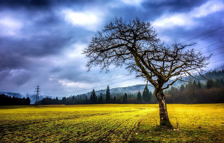Photo wallpaper field, summer, tree