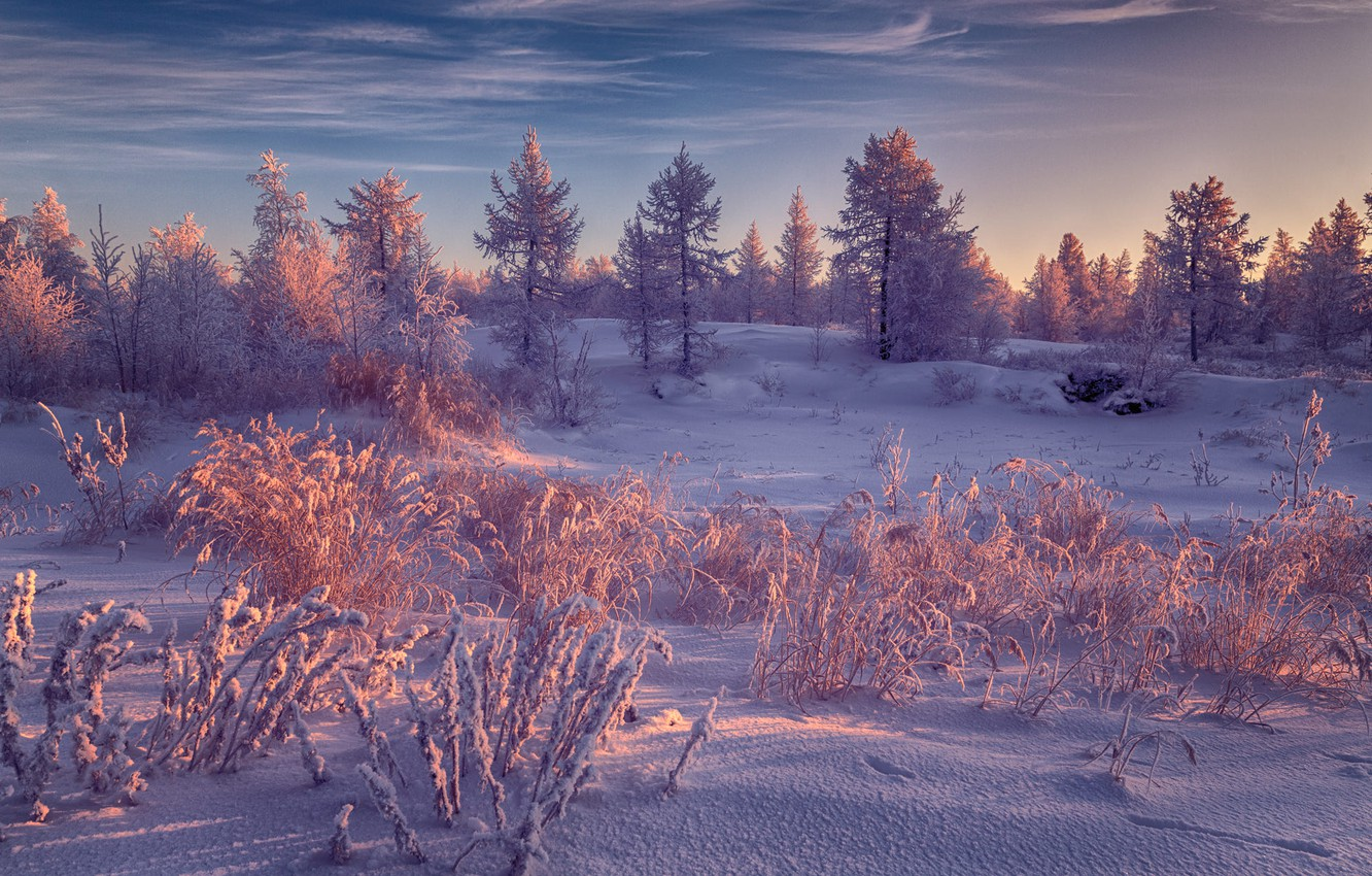 Photo wallpaper winter, frost, forest, the sky, clouds, light, snow, landscape, nature, in the snow, snow, winter, …