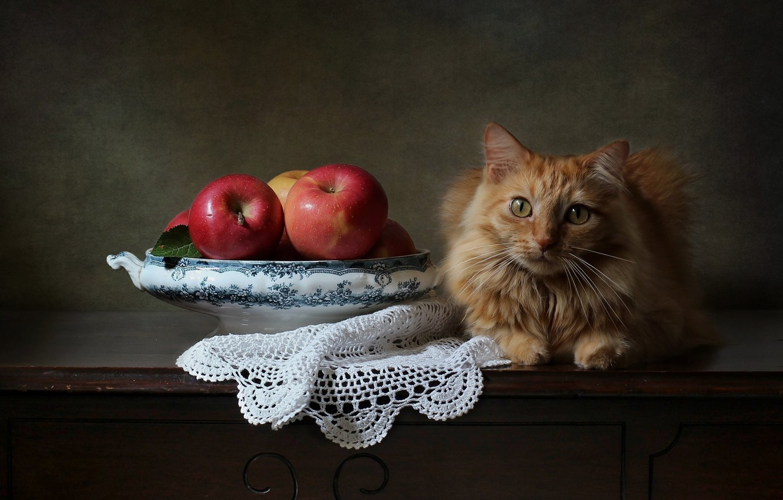 Photo wallpaper cat, look, background, apples, red, napkin, cat