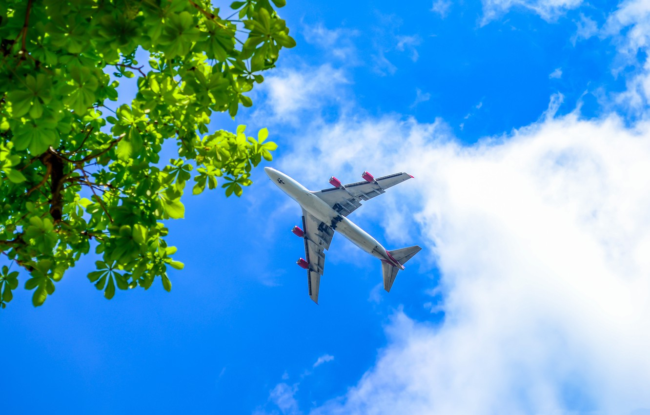 Photo wallpaper the sky, branches, the plane