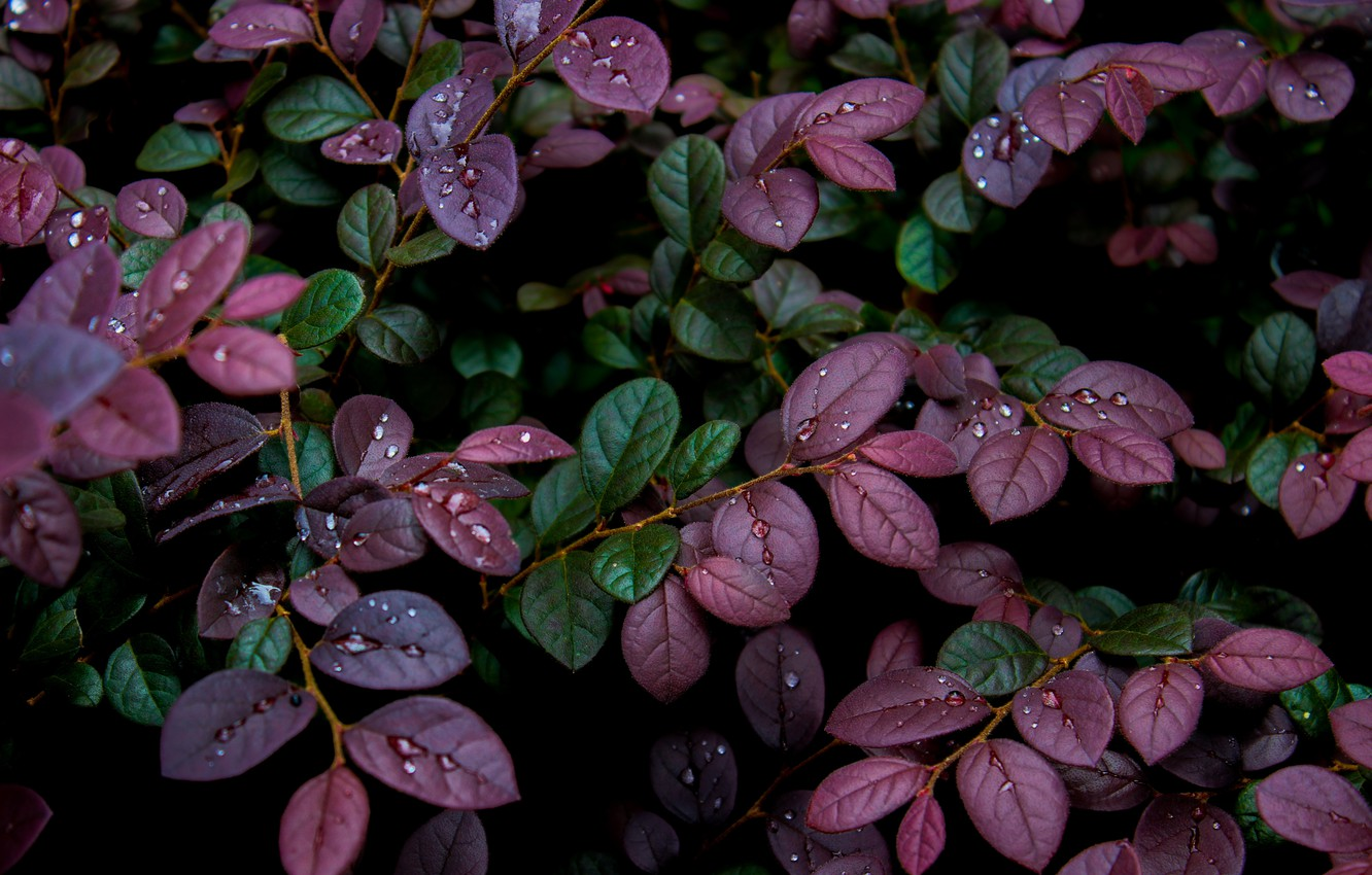 Photo wallpaper leaves, nature, plant, nature, leaves, water drops, water drops, plant