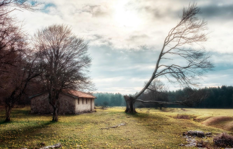 Photo wallpaper nature, house, tree