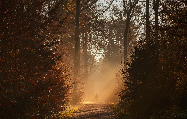 Photo wallpaper autumn, forest, trees, sunlight
