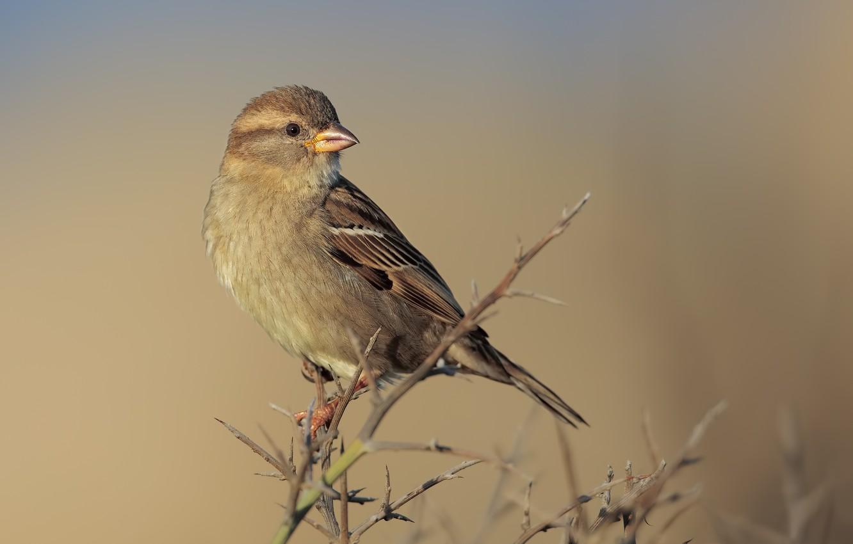 Photo wallpaper bird, branch, bird, pichuga