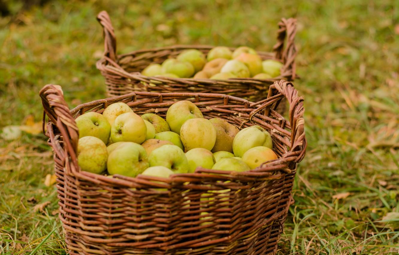 Photo wallpaper autumn, nature, apples, harvest, basket